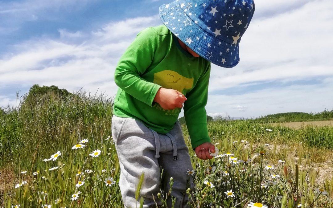 Salidas a la Naturaleza: aprendiendo a reconocer plantas silvestres